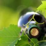 Weinflasche und Rebblatt